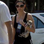 Celebridades y sus Chihuahuas: Demi moore y Ashton kutcher