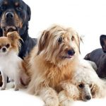 Cuál es el perro más recomendado para niños